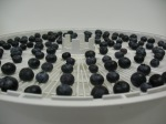 blueberries on a dryer tray